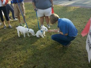 A team member petting two white puppies at a community service event